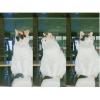 一只失忆猫